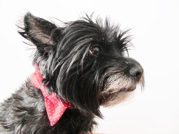 Valentine Bow Tie Dog Collar