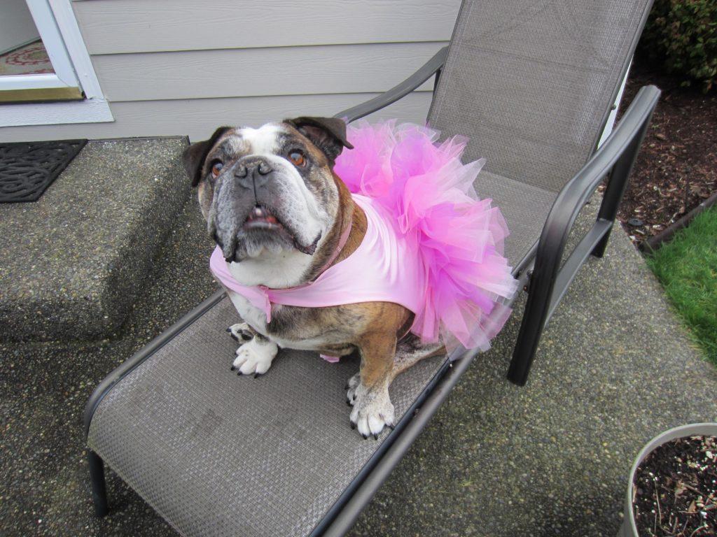 Roxanne sporting her new tutu