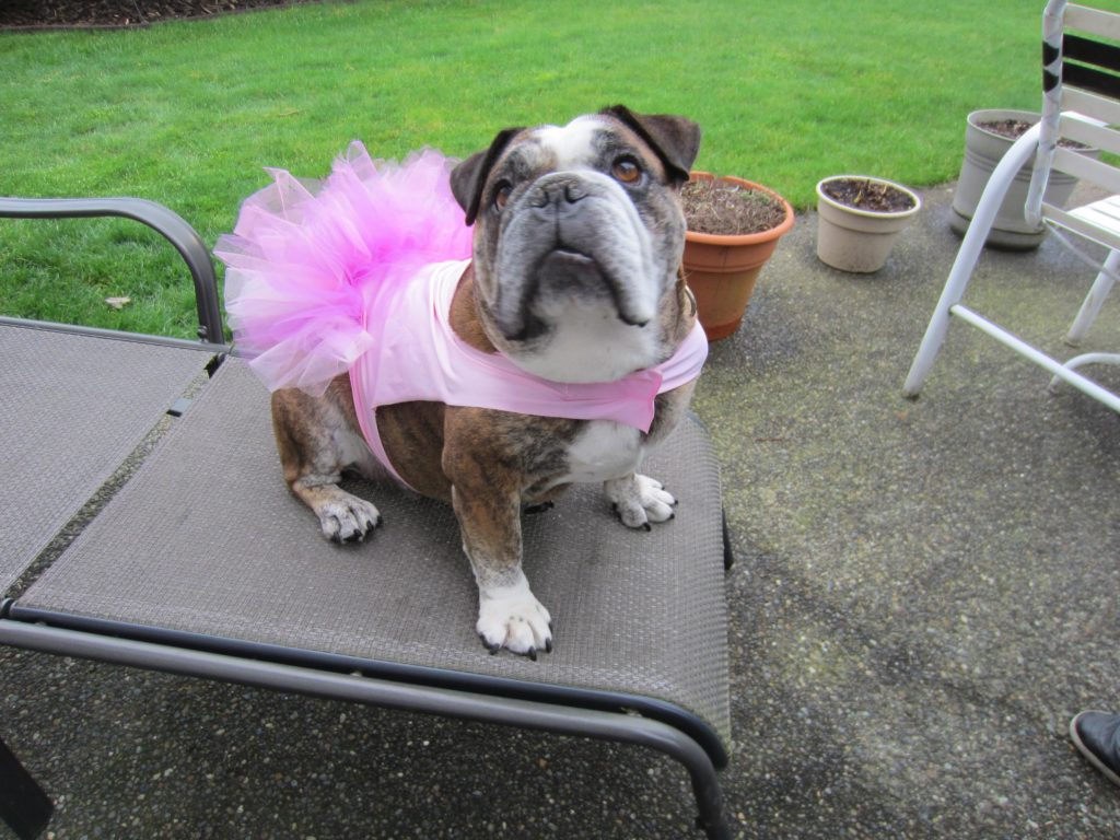 Another great shot of Rox and her tutu
