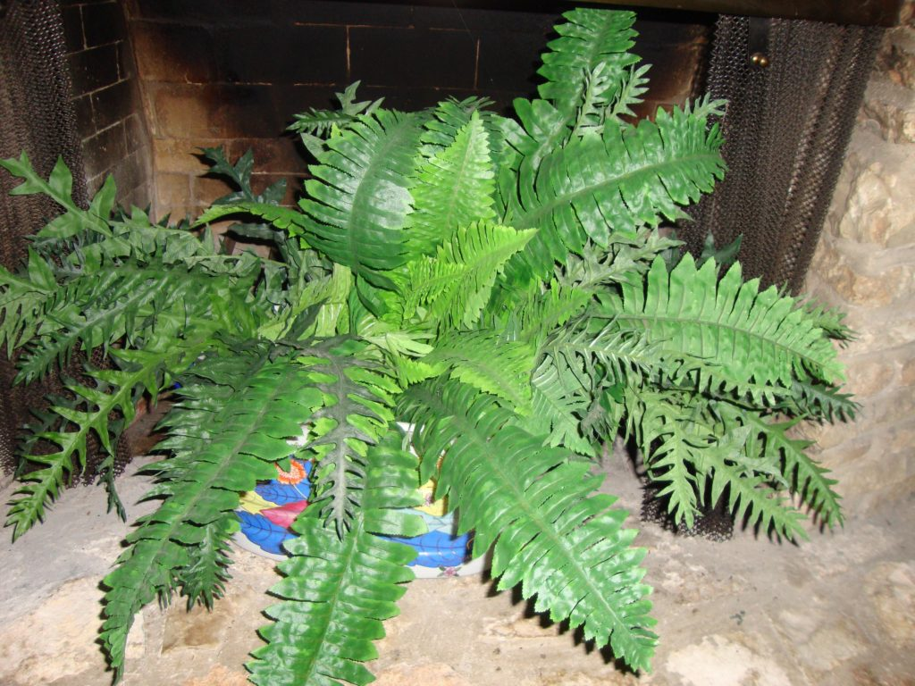 Summer mantel with a fern in the fireplace