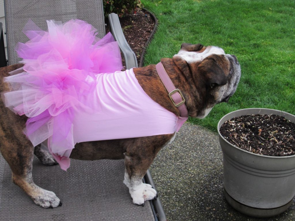 And more of beautiful Roxanne in her tutu
