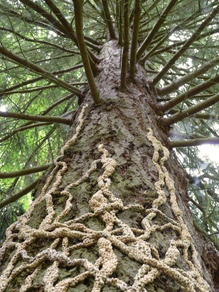 Barbara De Pirro Roots Vine Full