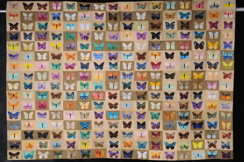 Butterflies and Moths by Amy Pabst