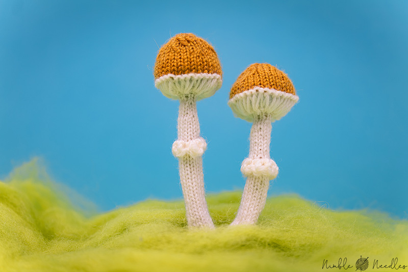 Tiny Little Mushrooms