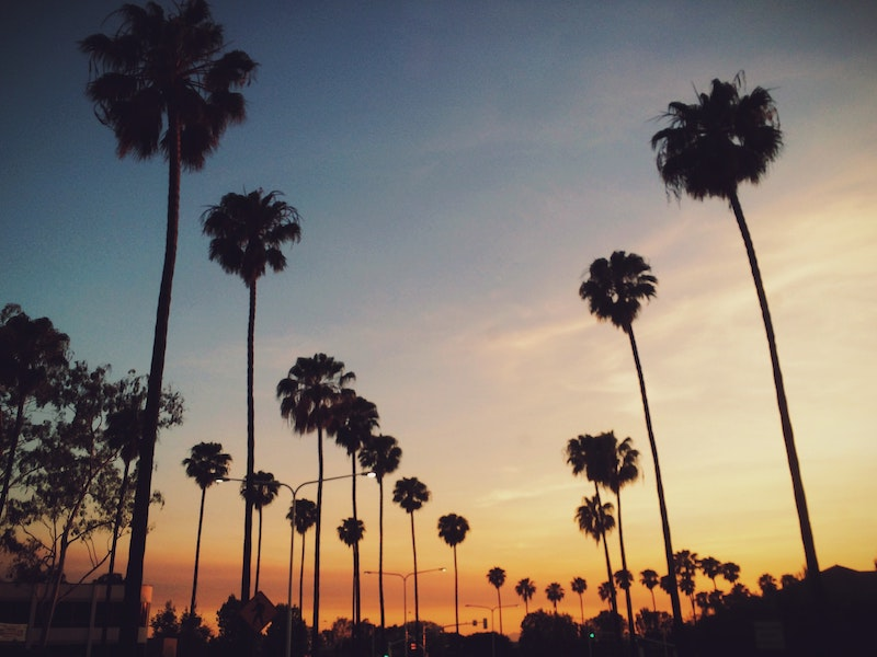 View of palm trees at sunset