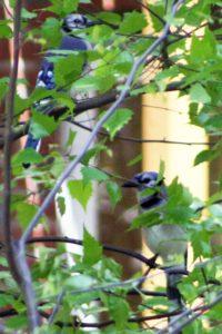 Spruce Hill Bird Sanctuary