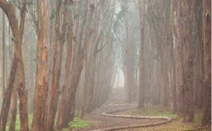 Wood Line trail