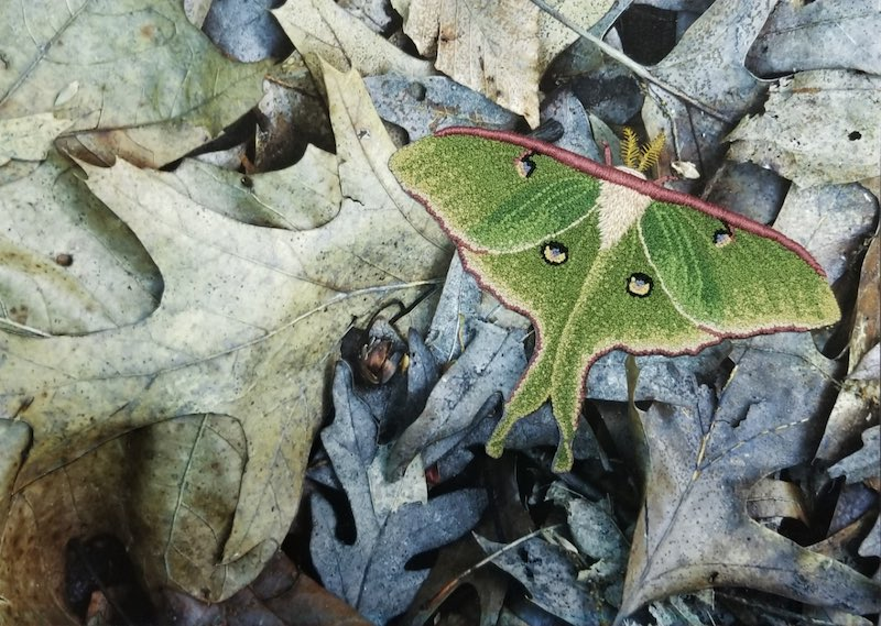 Luna Moth embroidery