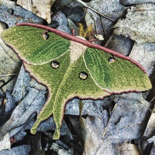 Detail 3 of Luna Moth