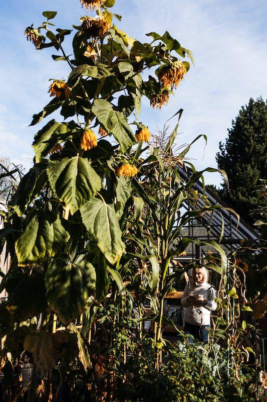 Sara and some sunflowers