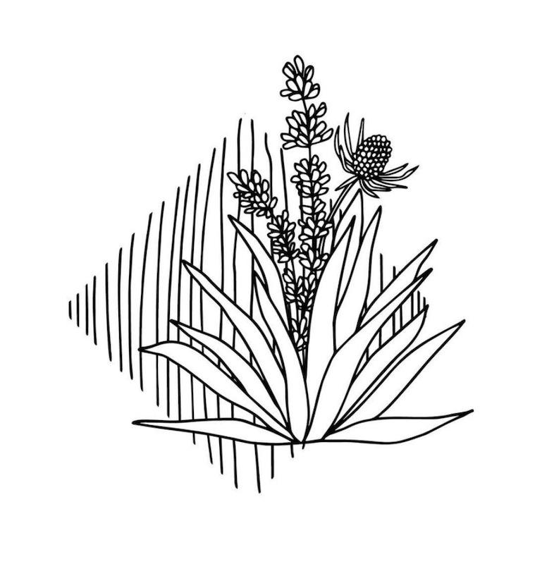 Alli Koch Flower illustration 2