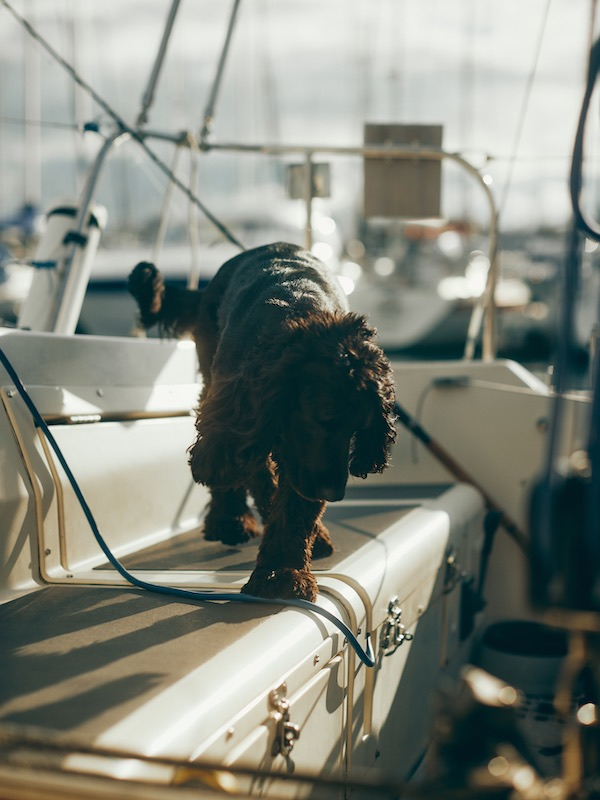 Murphy on the boat