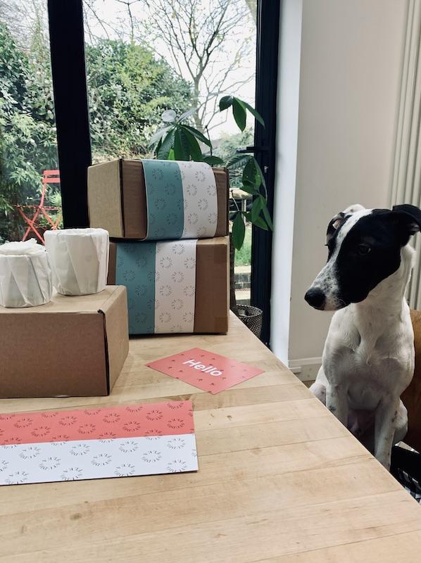 Georgies dog help box products