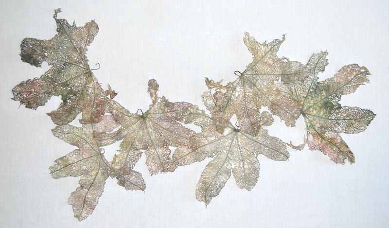 Leaf Fall, Hollyhocks