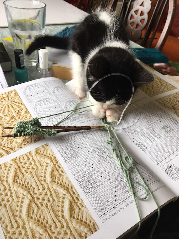 Kitten knitting help