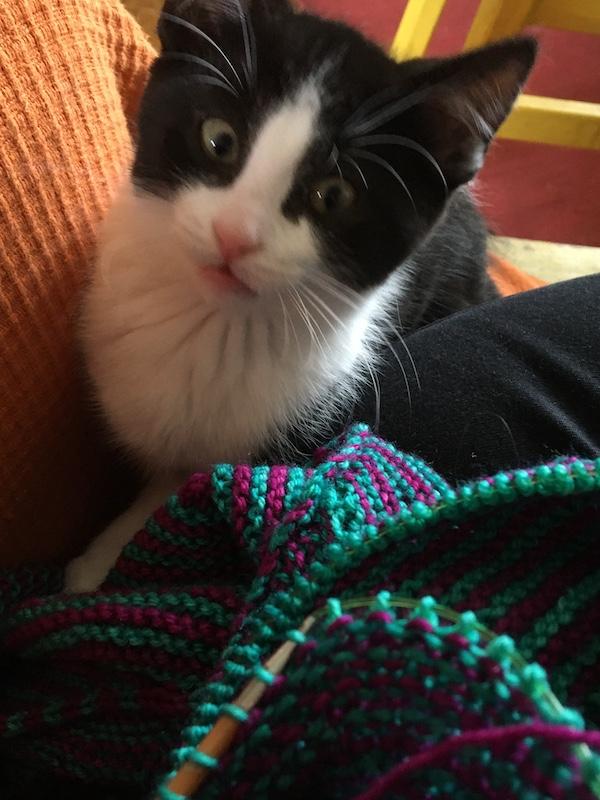 Kitten helping to knit