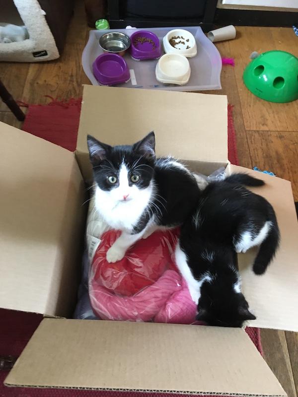 Kitten yarn delivery 2