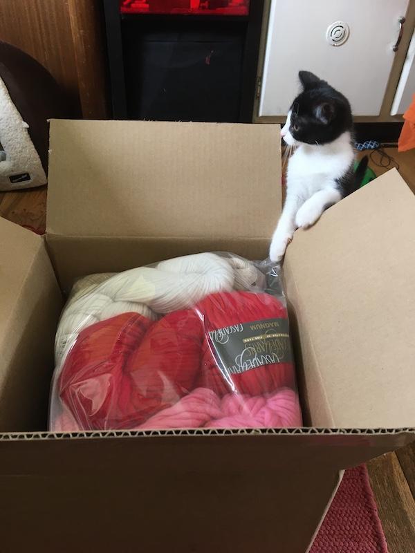 Kitten yarn delivery